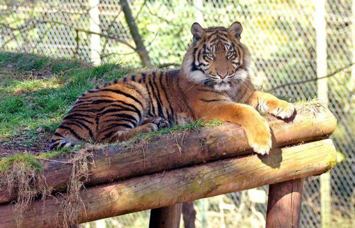 Paignton_Zoo-700x450
